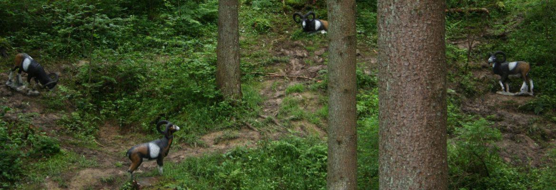Gamshorn-Trail